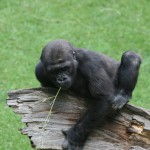 [Hannover] Zoo – Affen