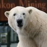 [Hannover] Zoo – Yukon Bay