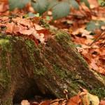 [Hannover] Herbst in der Eilenriede