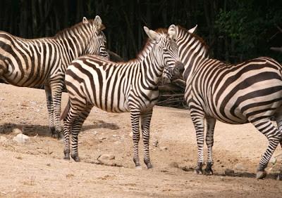 Zoobilder