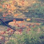 Herbst – Weil ich dich liebe…