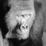 Portrait-Fotografie im Zoo