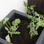 [Food Hype Friday] Urban Gardening – Mehr Bio geht nicht…
