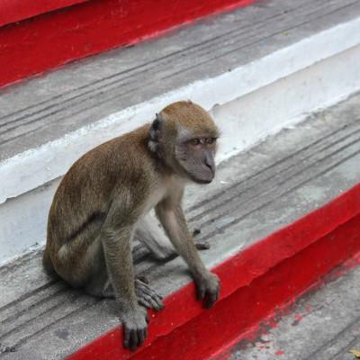 [Travelguide] Kuala Lumpur / Malaysia – Treppen, Tempelaffen und TwinTowers
