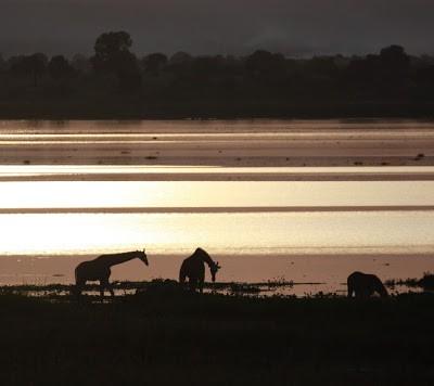 Unique Uganda VII Murchison Falls – Paradies für jeden Tierfreund