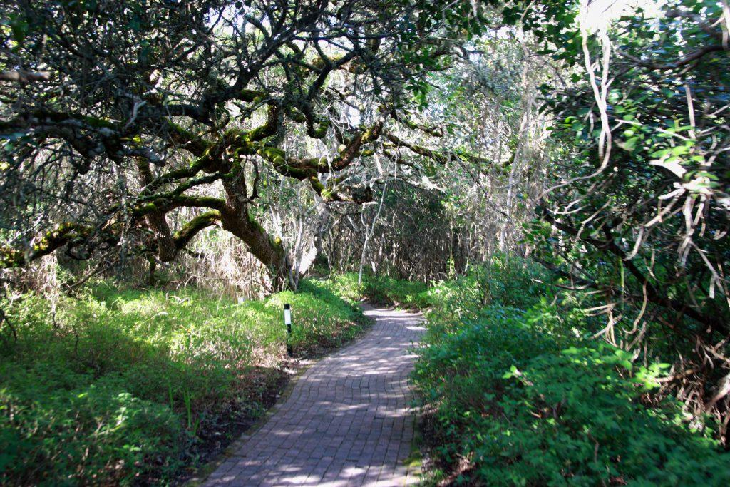 2 Grootbos Nature Reserve Sing meinen Song Forest LodgeWege - www.beautybutterflies.de