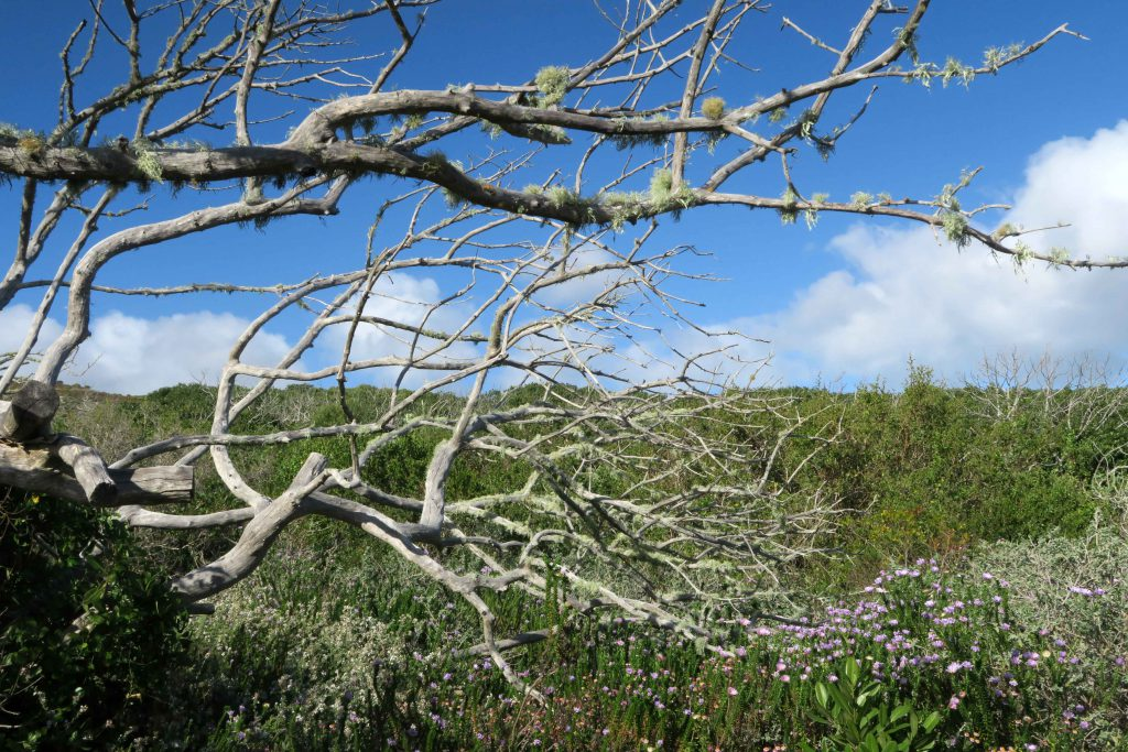 2 Grootbos Nature Reserve Sing meinen Song Hotelanlage - www.beautybutterflies.de