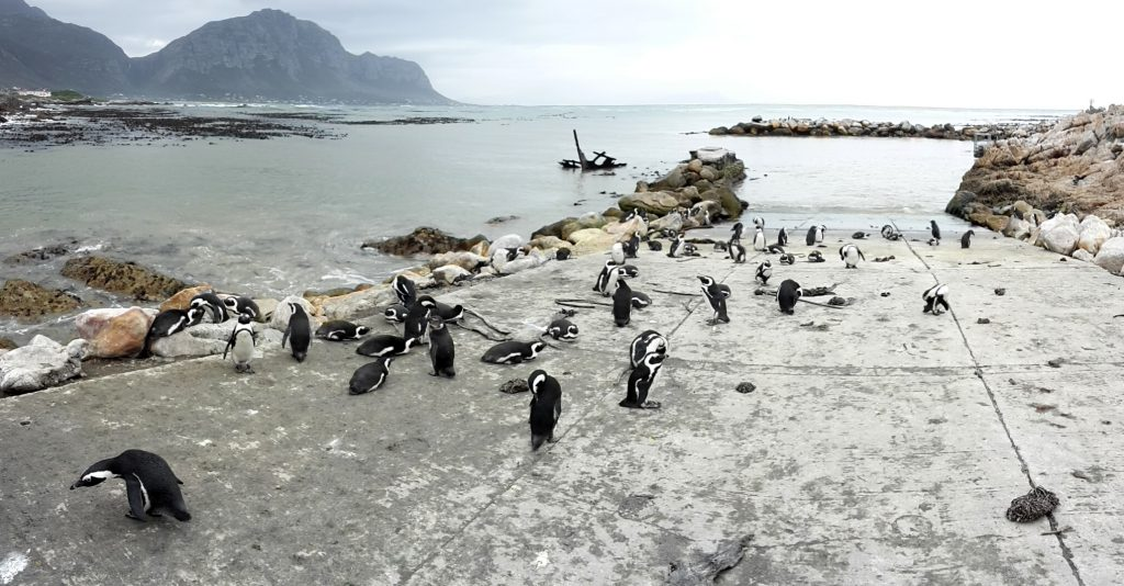 Bettys Bay South Africa Penguins - www.beautybutterflies.de