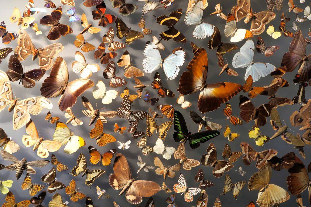Ein Tag in Muenster Naturkundemuseum und Planetarium 2 - www.beautybutterflies.de