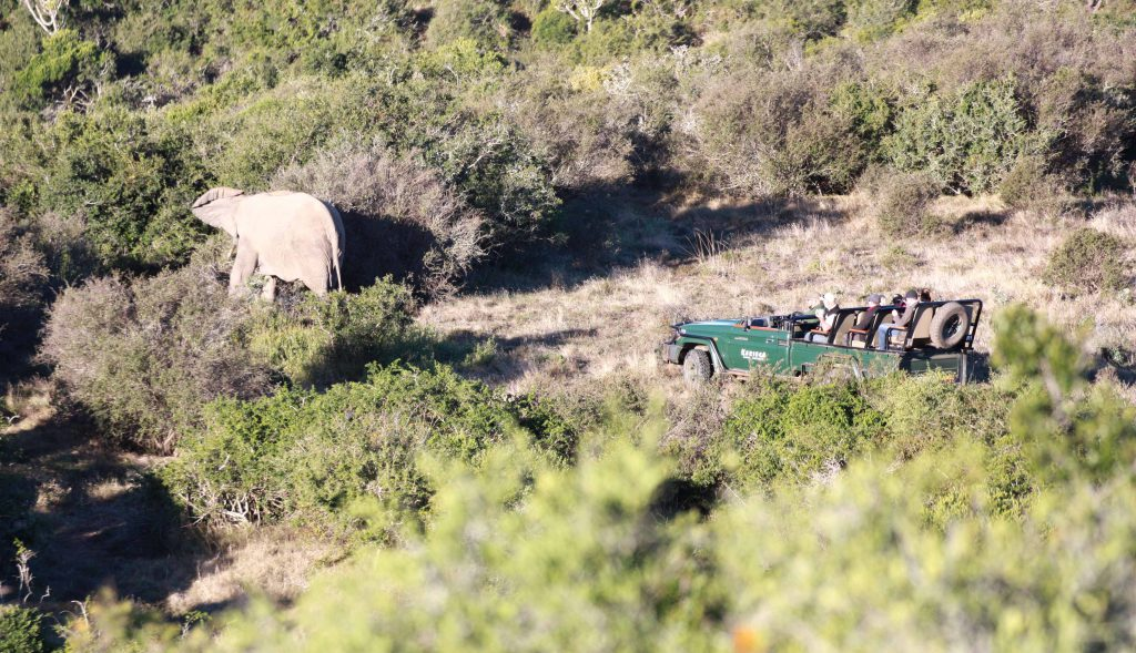 Kariega Private Game Reserve South Africa Elefant und Offener Jeep - www.beautybutterflies.de_17