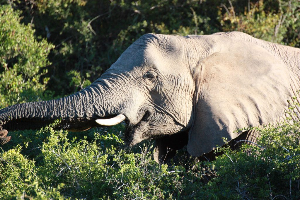 Kariega Private Game Reserve South Africa Elefant- www.beautybutterflies.de_17