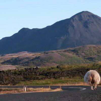Roadtrip Island – Allgemeine Infos zu 2 Wochen auf der Vulkaninsel