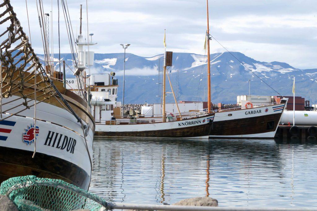 2-husavik-whale-watching-north-sailing-iceland-island-walbeobachtung-www-beautybutterflies-de-2