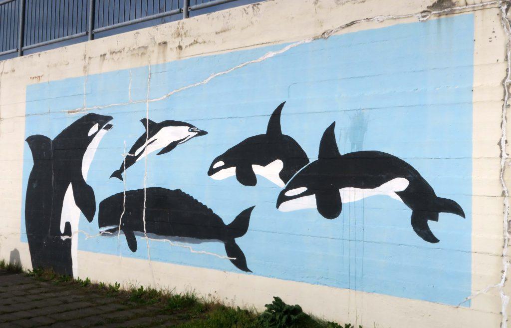 2-husavik-whale-watching-north-sailing-iceland-island-walbeobachtung-www-beautybutterflies-de-5