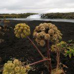 Roadtrip Island – Reise zum Mond / Askja Hochland