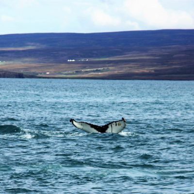 Roadtrip Island – Götterwasserfall und Whale Watching in Husavik