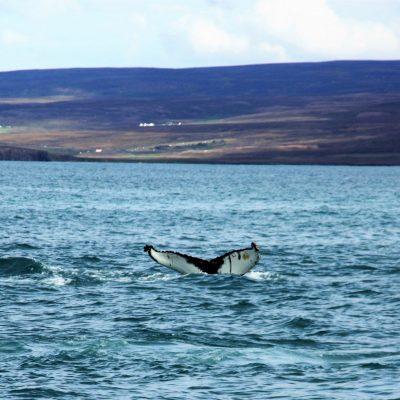 Roadtrip Island – Götterwasserfall und Whale Watching in Husavik