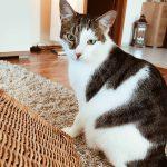 Wochenrückblick 20/2019 – Cat Content & Lebensmittelrettung