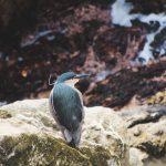 Antarktis Tagebuch #5 – Stanley: Very British