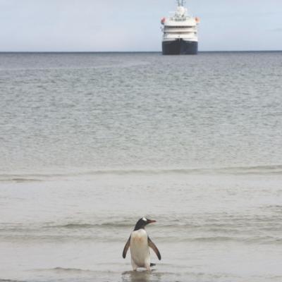 Antarktis Tagebuch #4 – Pinguine & Plastik am anderen Ende der Welt