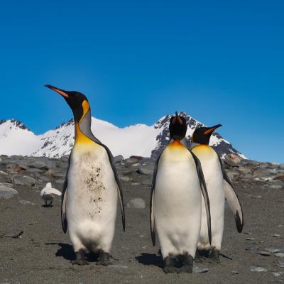Antarktis Tagebuch #7 – Eine halbe Millionen Pinguine