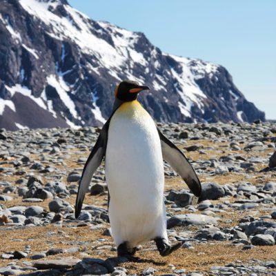 ANTARKTIS TAGEBUCH #9 – Auf Spuren von Shackleton