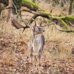 Tiergarten Hannover – Heimische Wildtiere beobachten