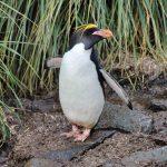 Antarktis Tagebuch #13 – Erste Vorboten aus der Antarktis