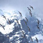 Antarktis Tagebuch #14 – Auf Shackletons Spuren vor Elephant Island
